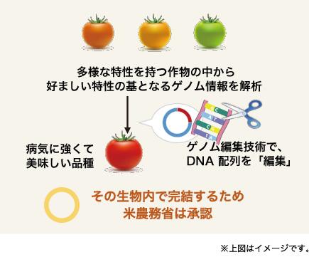 遺伝子 違い 組み換え 編集 ゲノム ゲノム編集食品とは? 成分改良などのメリットがある一方で、その安全性は?